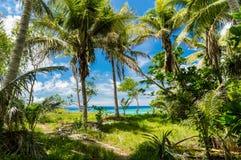 热带密林和美妙的海 库存图片