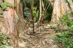 热带密林在奥阿胡岛 免版税库存照片