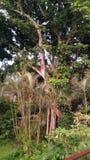 热带密林庭院 免版税图库摄影