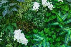 热带密林有作为蕨和棕榈树叶子的富有的绿色植物的 免版税库存照片