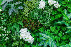 热带密林有作为蕨和棕榈树叶子的富有的绿色植物的 免版税库存图片