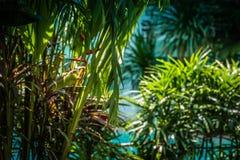 热带密林 绿叶风景看法在热带密林 图库摄影
