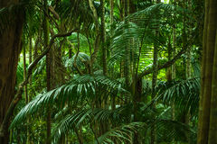 热带密林 库存照片