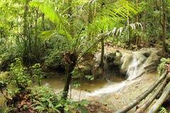 热带密林 免版税图库摄影