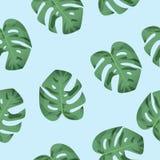 热带密林Monstera生叶无缝的样式 传染媒介illustra 免版税库存照片