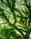 热带密集的绿色雨林在北部澳洲 库存图片
