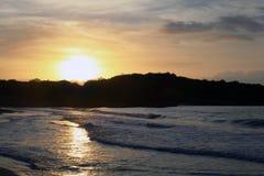 热带寿命 免版税库存照片