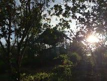 热带小屋在泰国的密林 免版税库存图片