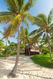 热带小屋的密林 免版税库存照片