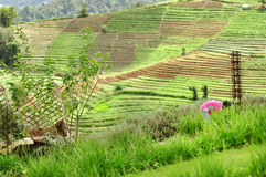 从热带山和农夫,清迈上面的观点, 免版税库存照片