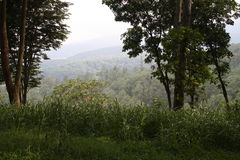 热带山的上面 库存图片