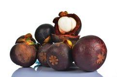 热带山竹果树果子 库存图片