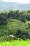 从热带山,清迈,泰国上面的观点  免版税库存照片