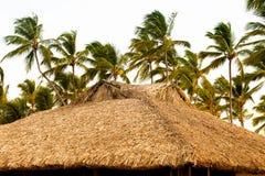 热带平房和棕榈树在惊人的蓝色盐水湖旁边 库存照片