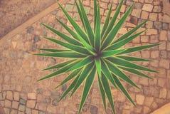 热带年轻棕榈植物顶视图在城市 免版税图库摄影