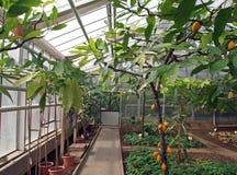 热带庄稼的温室 免版税库存图片