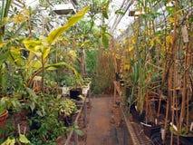 热带庄稼的温室 免版税图库摄影