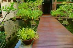 热带庭院的路径 图库摄影