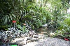 热带庭院的香料 免版税库存照片