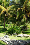热带庭院绿色的轻拍 免版税库存图片
