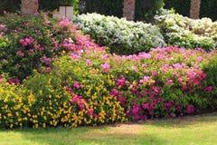 热带庭院花篱芭 库存图片