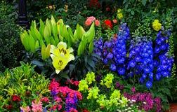 热带庭院视图 免版税库存照片
