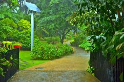 热带庭院雨 库存图片