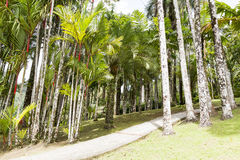 热带庭院马提尼克岛 免版税库存照片