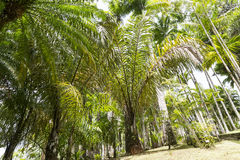 热带庭院马提尼克岛 免版税库存图片