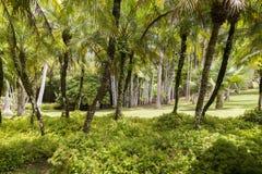 热带庭院马提尼克岛 图库摄影