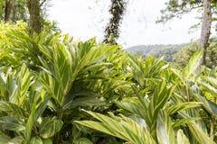 热带庭院马提尼克岛 免版税图库摄影