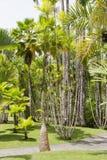 热带庭院马提尼克岛 库存图片