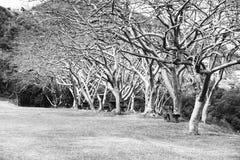 热带庭院马提尼克岛 库存照片