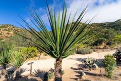 热带庭院,加利福尼亚 库存照片