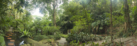 热带庭院,马来西亚 库存图片