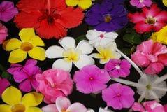 热带异乎寻常的花 图库摄影