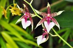 热带异乎寻常的花 库存照片