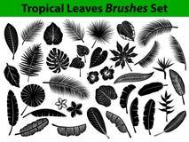 热带异乎寻常的叶子现出轮廓与有些花的汇集在黑颜色 库存照片