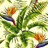 热带异乎寻常的绘画无缝的背景 库存照片