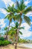 热带惊人的海滩 库存照片
