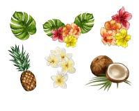 热带手拉的水彩和exotics的收藏开花 向量例证