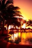 热带手段的日落 免版税图库摄影