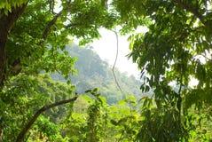 热带抽象的森林 免版税图库摄影