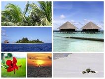 热带拼贴画的海岛 库存图片