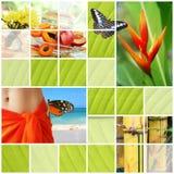 热带拼贴画的夏天 图库摄影