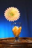 热带收藏:在玻璃的切的桔子 免版税库存图片