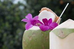 热带新鲜的椰子鸡尾酒 库存照片