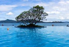 热带无限的池 库存图片