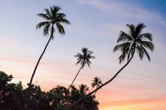 热带日落在Moorea,法属玻里尼西亚 免版税库存图片