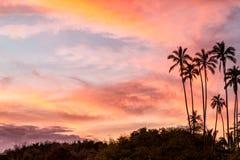 热带日落棕榈树 库存照片